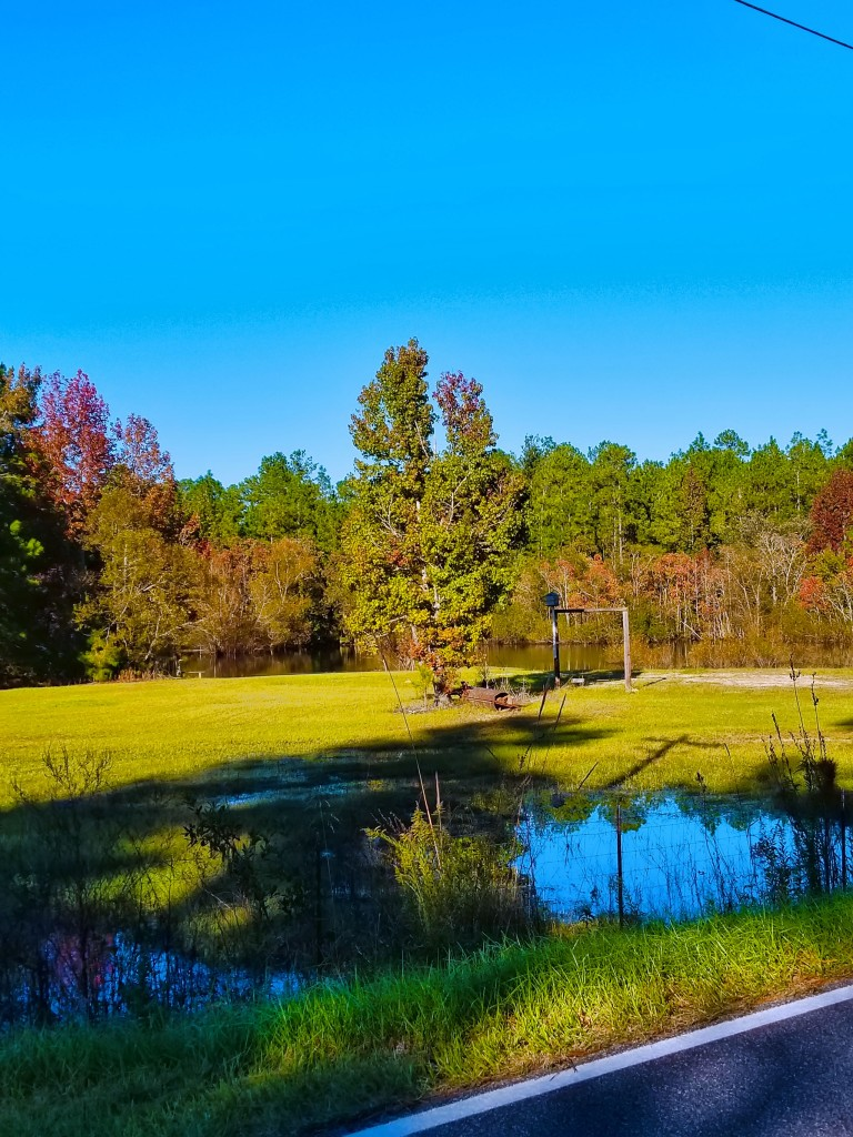 The Pond by Lauren Lambert